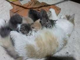 Se regalan gatitos de 2 meses de edad bien bonitos