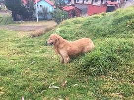 Perro para monta