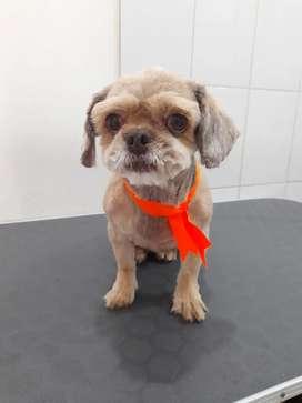 Busco bañador para veterinaria