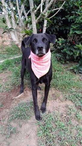 en adopcion perro: manuela (criolla)