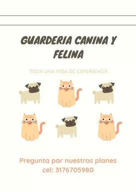 Guardería para perros y gatos