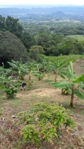 Hermosa parcela de 4 hectáreas en Mariquita Tolima