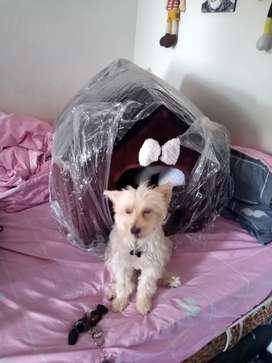Vendo hermosa casa de perro