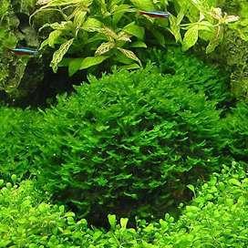 Pack 6 paquetes de semillas para acuario plantas acuáticas hierba semillas peces tanque paisaje ornamento