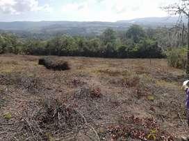 Vendo hermosas parcelas planas en Curiti de 2500m2 a tan sólo 45 millones con Escrituras Públicas Desenglobadas