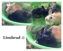 Conejos de todo porte