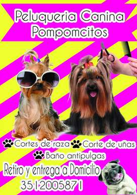 Peluqueria canina Pomponcitos