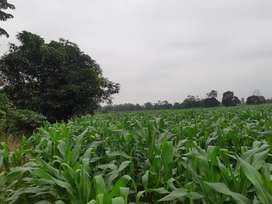 Terreno para Cultivos