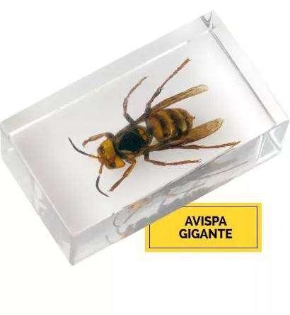 Insecto Avispa Gigante Tailandia 0