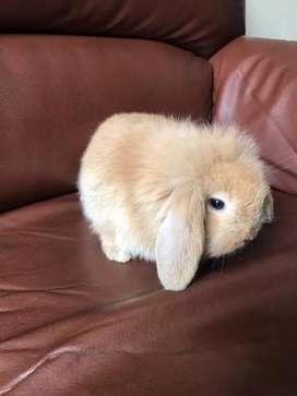 Conejo pequeños
