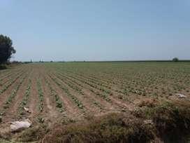 Venta de tierras agrícolas de 10.89 has . cerca al mar Caucato