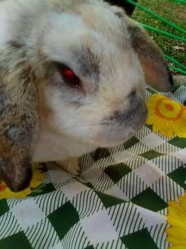Vendo conejos parejitas