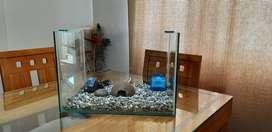 Vendo acuario
