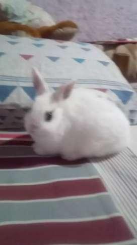 Criadero de conejos renacer