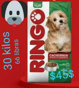 Ringo Cachorro1