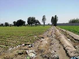 Terreno agricola con edificación en huaral , para almacen, planta de produccion (0.8ha) y siembra (1.2Ha), Total 2 has.