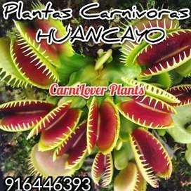 Plantas Carnivoras Venus Atrapamoscas