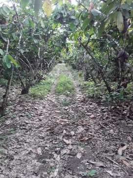 Finca de 8 hectáreas