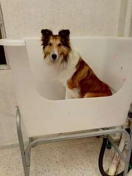 Tina bañera peluquería canina y felina liviana fácil de instalar incluye grifería