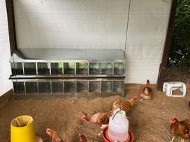 Ponederos para gallinas
