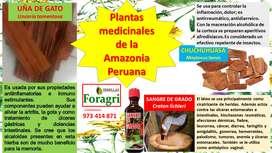 VENTA DE DERIVADOS DE PLANTAS MEDICINALES