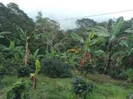 Se vende finca de 6.5 hectareas