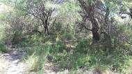 Agropatagonia vende 2800 has San Luis