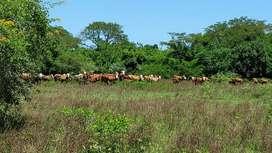 Campo Corrientes San Miguel
