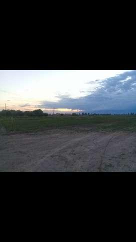 Vendo, única titular , terreno de 500 mts2 , en la zona de rodeo del medio ,Maipú.