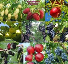 Arboles frutales medicinales bayas plantas exoticas variedad 100+ vivero tierra abonos, hongo de yogurt, hojas secas