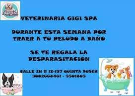 Servicio de peluquería y veterinaria gigi spa