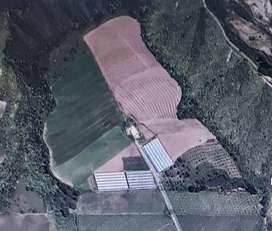 Venta de finca en Pimampiro de 23 hectáreas con árboles frutales