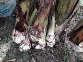 Vendo colines de plátano arton