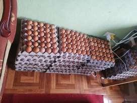Huevos al por mayor y menor
