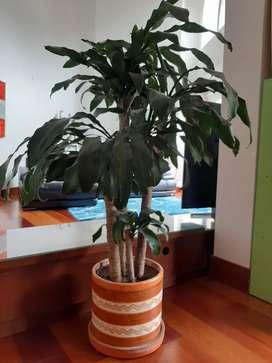 Planta hermosa