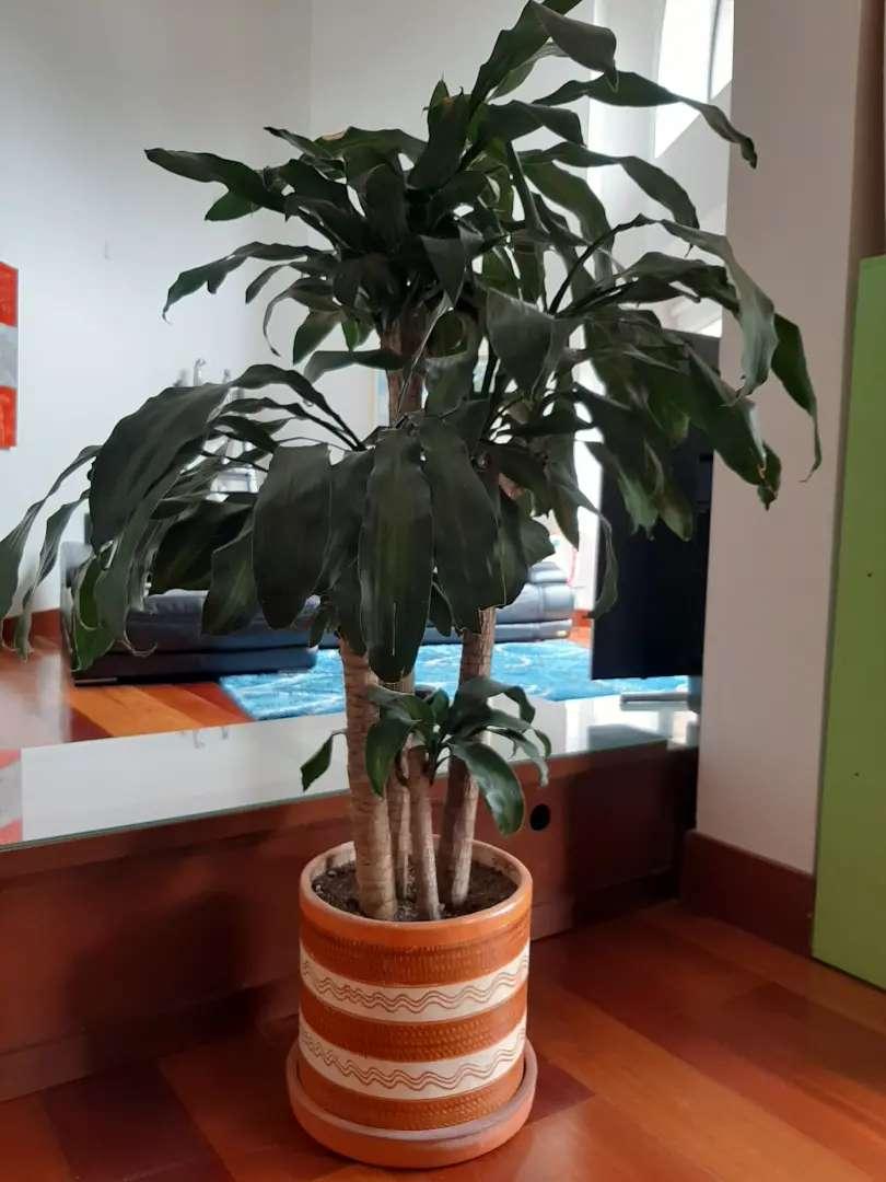 Planta hermosa 0