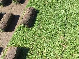 Venta de grama al mayor y menor