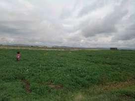 Se vende 2 hectáreas de terreno agrícola en Illpa Puno Perú