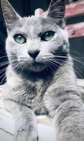 Gatitos en adopción! (GATO GATOS)