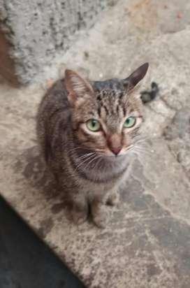 Caramelo. Hermosa gatica de un año en adopción