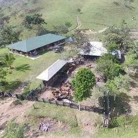 Finca Producción Piscicultura y Ganado en Yolombó, 64 Ha