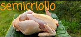 Pollo semicriollo listo para consumir