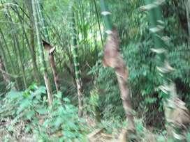 Venta de terreno 14 hectareas negociable en los tigres de pueblo nuevo