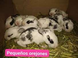 Conejos distintas razas