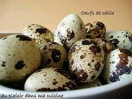 Huevos de Codorniz Al por Mayor Detal