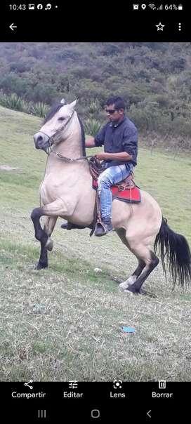 Venta caballos