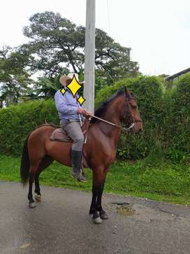 Vendo caballo muy bueno