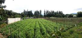 Hermoso terreno en Yaruqui