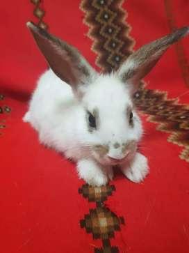 Conejos lindos para mascota