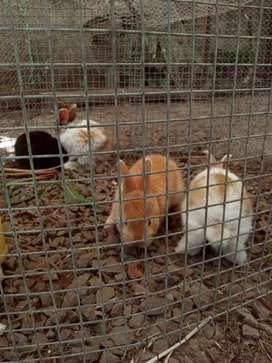 Conejos bebe